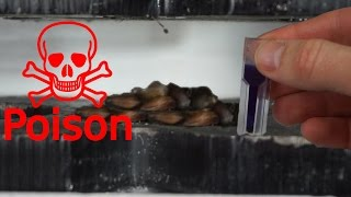 Extracting Cyanide From Apple Seeds With Hydraulic Press