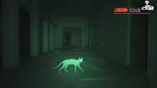 شوفو وش صار لما زرعت الكاميرا داخل البيت المسكون ..!!!