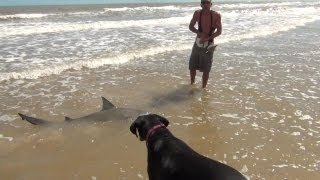 Awesome Fishing Catch! 2 Sharks, 1 Hook!
