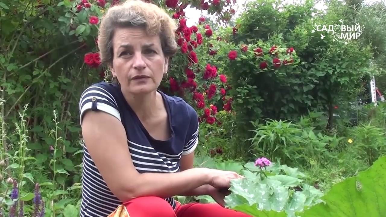 """Почему не завязываются кабачки. Сайт """"Садовый мир"""" - Bayan.Tv - Bayana dair. - Video Portal"""