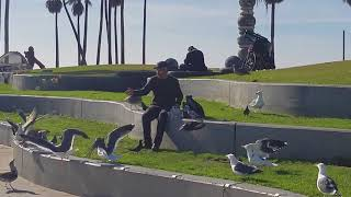bird man of venice beach
