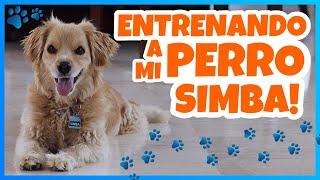 Daniel El Travieso - Entrené A Mi Perro Simba!