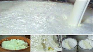Street Foods Of India | Malai Milk, Curd, Malai, Lassi Etc. Of Bombai Milk Bar, Kolkata, WB, India