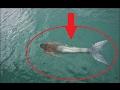 Kameralara Yakalanmış 5 Deniz Kızı V...mp3
