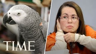 Woman Is Convicted Of Murder After Parrot Who Witnessed Killing Repeats
