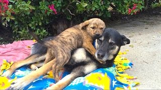 Hope for Paws found these pups living in a cave.  Here they are at our foster home