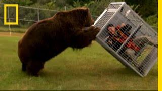 Brown Bear Attack   Dangerous Encounters: Alaska