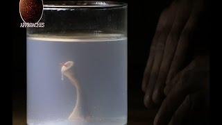 Sperm and Chicken Egg Monster update Part 2 & DNA Crosssbreeding