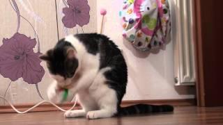 Katze springt fast 2 Meter hoch...lol ;)