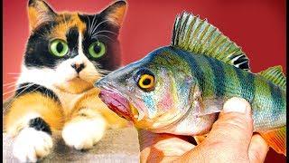 Eine Angel gemacht und Fisch gefangen!