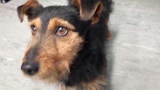 """Hamish the Irish Rail dog"" reunited with family"