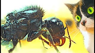 Slivki Show und Ameisen - [30 Tage später]