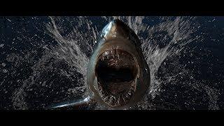 187 Strassenbande - HaifischNikez Allstars (Official Video)