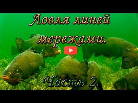 рыбалка на линя мордой