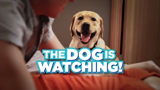 I Wish the Dog Would Stop Watching Us Have Sex