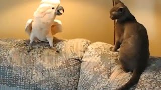 17 FUNNY PET VIDEOS 🐶🐐😻 TRY NOT TO LAUGH [Funny Pets]