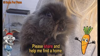 Little bunny gets rescued thanks to a Hope For Paws fan from Switzerland!