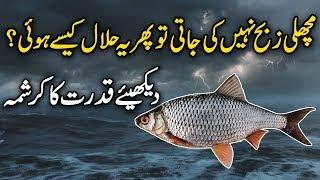 Machli Kyun Halal Hai ( Why Fish Halal ) urdu stories | Islamic stories