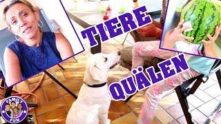EKELIGE FLIEGENPLAGE IM HAUS |  Vlog #97 Our life FAMILY FUN