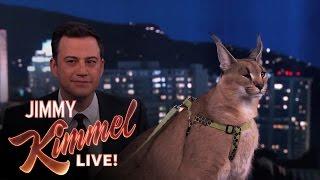 Dave Salmoni Scares Jimmy Kimmel with Wild Animals