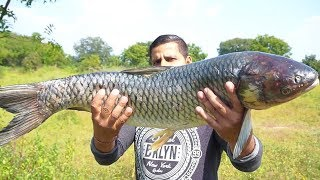BUYING & COOKING BIG FISH || BEST FISH RECIPE || FISH CURRY INDIAN RECIPE ||