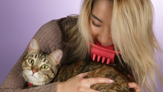 People Lick Their Cats With The Licki Brush