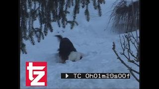 Achtung: Verstörende Aufnahmen aus dem Landkreis Miesbach - Hundeattacke gefilmt