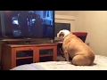 Šuns reakcija baisiausioje siaubo filmo...mp3