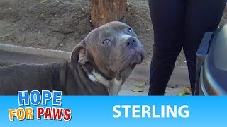 Abandoned Pit Bull doesn