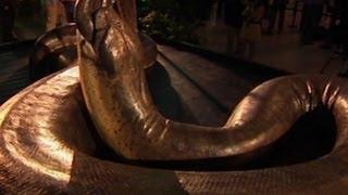 Replika Titanoboa Ular Terbesar Di Dunia