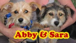 Dog rescue: Sara & Abby (Please share and help us find them a loving forever home)