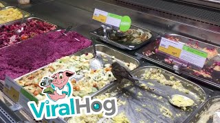 Sparrow Finds His Way to Food  || ViralHog
