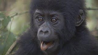 Celebrate Dian Fossey
