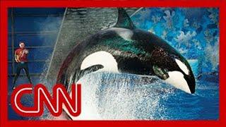 SeaWorld releases video of 2006 killer whale attack
