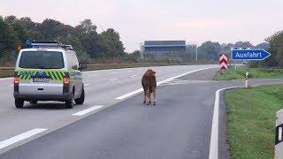 Der Alltag der Autobahn-Polizisten - Dokumentation 2017 HD *NEU* ✔