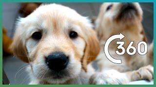 ADORABLE Puppy Guide Dogs In 360° - Earth Unplugged