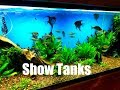Tour of Show Tanks at Local Fish Shop, T...mp3