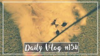 SUPER WITZIG! #dailyvlog Nr. 154 | MANDA