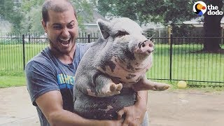 Hurricane Harvey Pig Rescue: Family Refuses to Leave Pig Behind | The Dodo