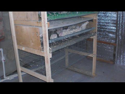 Как сделать клетки для кур в гараж