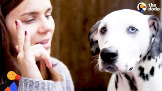 Deaf Dalmatian Rescued by Mom Who Learns Sign Language for Him | The Dodo