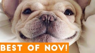 Funniest Pet Reactions & Bloopers of November 2017 | Funny Pet Videos