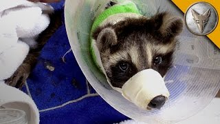 Animal Rescue with the Ohio Wildlife Center