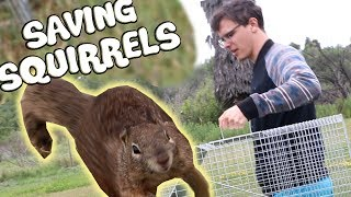 Trapping and Relocating Squirrels - An Examination