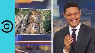 Kenyan Politician Wants To Give Counselling To Two Gay Lions  | The Daily Show