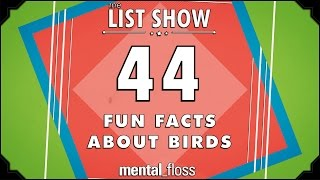 44 Fun Facts about Birds  - mental_floss List Show Ep. 440