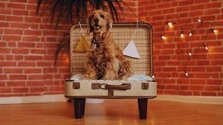 Weiches Hundekörbchen im Koffer lädt Vierbeiner zum Schläfchen ein.