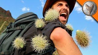 Brave Wilderness   EXTREME Cactus Attack!