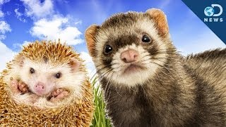 Why These Cute Animals Are Illegal To Own
