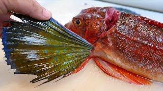 Japanese Street Food - SEA ROBIN FISH Sashimi Okinawa Seafood Japan